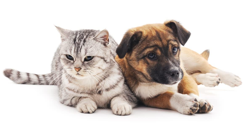 Tiergesundheit aus Ihrer Apotheke